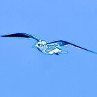 09-127 ~ Blue Seagull by djyoriginals
