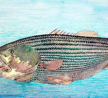 Striped Bass by JETIII