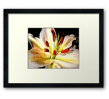 Lily in Colour Framed Print