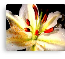 Lily in Colour Canvas Print