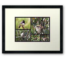 Costa's Hummingbird ~ Family Portrait Framed Print