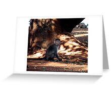 Indian Monkey Greeting Card