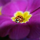 Lady bug & primrose by SKNickel
