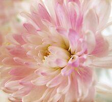 ~ Softly ~ by Brenda Boisvert