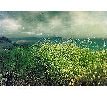 """ Porthscatho Hedgerow"" Photographic Print"