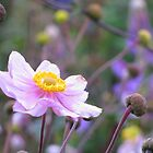 Pink Dog Rose - close framing by Tazfiend