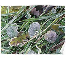 December Frost Poster