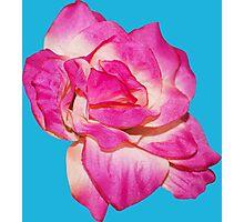 Flower - beautiful pink gift Photographic Print
