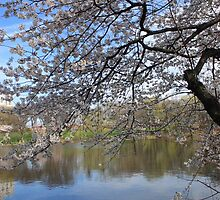 Spring in New Jersey by Lauren Banks