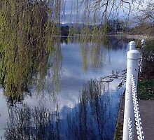 Willows and Water by Jann Ashworth