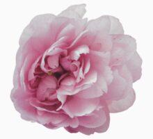 Wonderful pink peony by Olga Chetverikova