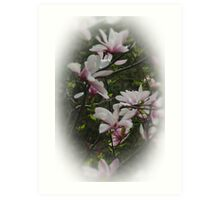 Blossums Of Spring Art Print