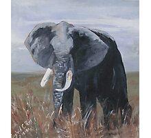 """A Rogue Elephant"" Print Photographic Print"