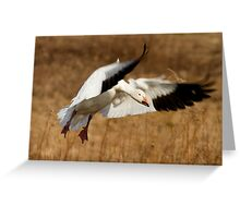 Snow Goose Landing Greeting Card