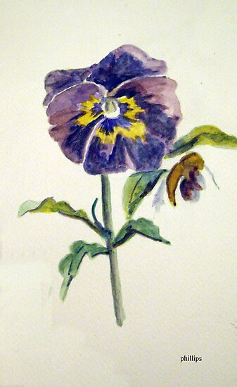 Floral Study Sketch - Pansy by Jim Phillips