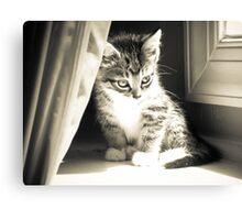 Kitten in Sunbeam  Canvas Print