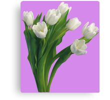 Bunch of white tulips Canvas Print