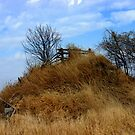 A Fency Hill ..... by Larry Llewellyn