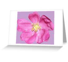 Soft purple flower Greeting Card