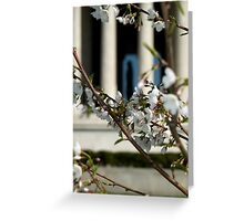 Jeffersonian Blossoms Greeting Card