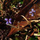 wild flowers by Phillip M. Burrow