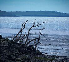 Riverside Driftwood by Wheatley