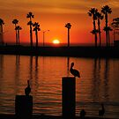 Sunset with Pelicans by keng612