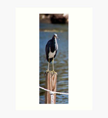 Marsh Bird Art Print