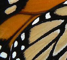 Monarch wings ~ A closer look by Jeannine St-Amour
