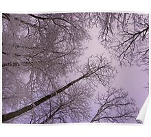 snow trees pink sky Poster