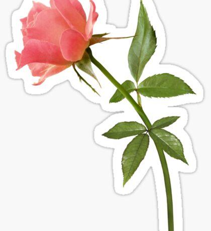Romantic pink rose Sticker