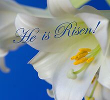 He is risen! by Kathleen  Bowman