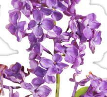Beautiful lilac branch Sticker