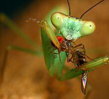 """This fly head taste of jam"" by Scott Thompson"