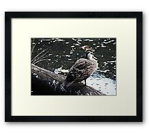 Duck Waiting By The River Framed Print