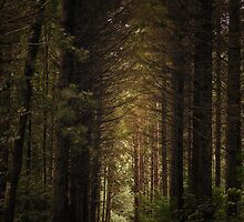 The Road To The Garden Of Eden.. by RichardB-Grafix