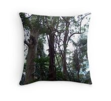 All kinds of trees in Montville - Sunshine Coast Hinterland Throw Pillow