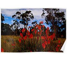 Aussie Bushland Poster