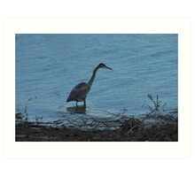 Wading into the Water Art Print
