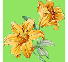 Yellow orchides Photographic Print