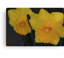 Duo In Daffodils Canvas Print