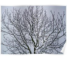 Snowflakes Fallen on the branches Poster