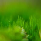 Drowning in the Green by TriciaDanby