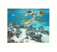 Cook Islands fish spectacular Art Print