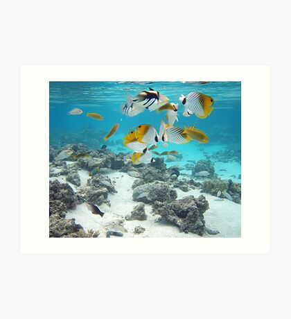 Cook Islands fish spectacular Art Print