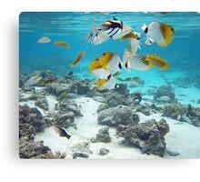 Cook Islands fish spectacular Canvas Print