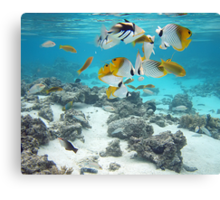 Cook Islands fish spectacular Canvas Print