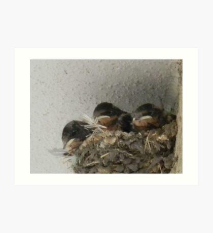 Barn Swallow Babies Art Print