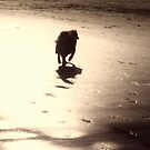 saz on the sands by xxnatbxx