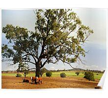 Cattle Station near Tamworth, NSW, Australia Poster